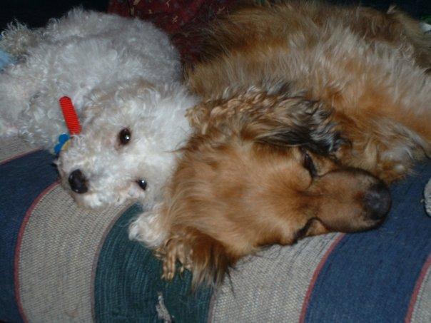 Sofa dogs 110308
